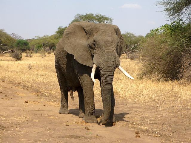 象(ゾウ)に関する雑学・豆知識・トリビア