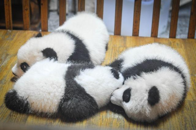 パンダに関する雑学・豆知識・トリビア