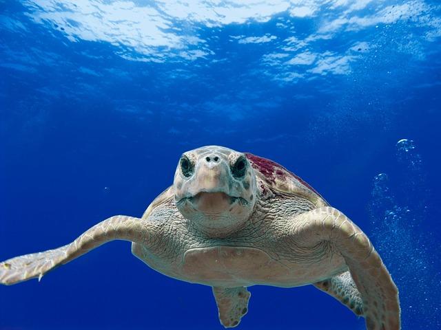 運動不足の私が週末の朝に近くのプールに行って泳いでみた 出会いは?人の多さは?一人プールは大丈夫?